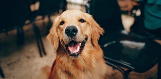 Hundefutter Pferd – Gesund und ohne Risiken