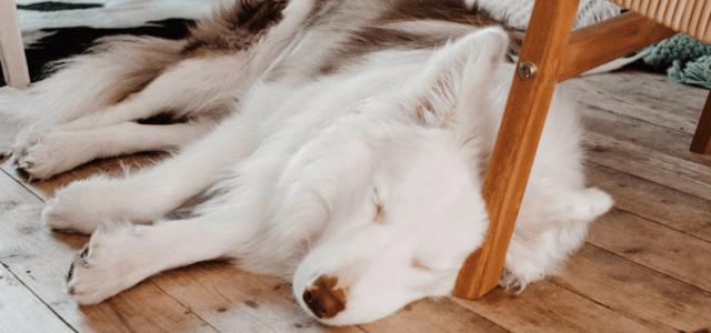 Das richtige Hundebett für die Vierbeiner entdecken