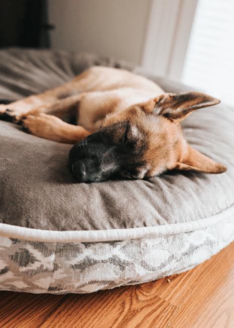 Ein guter Schlafplatz für den Hund