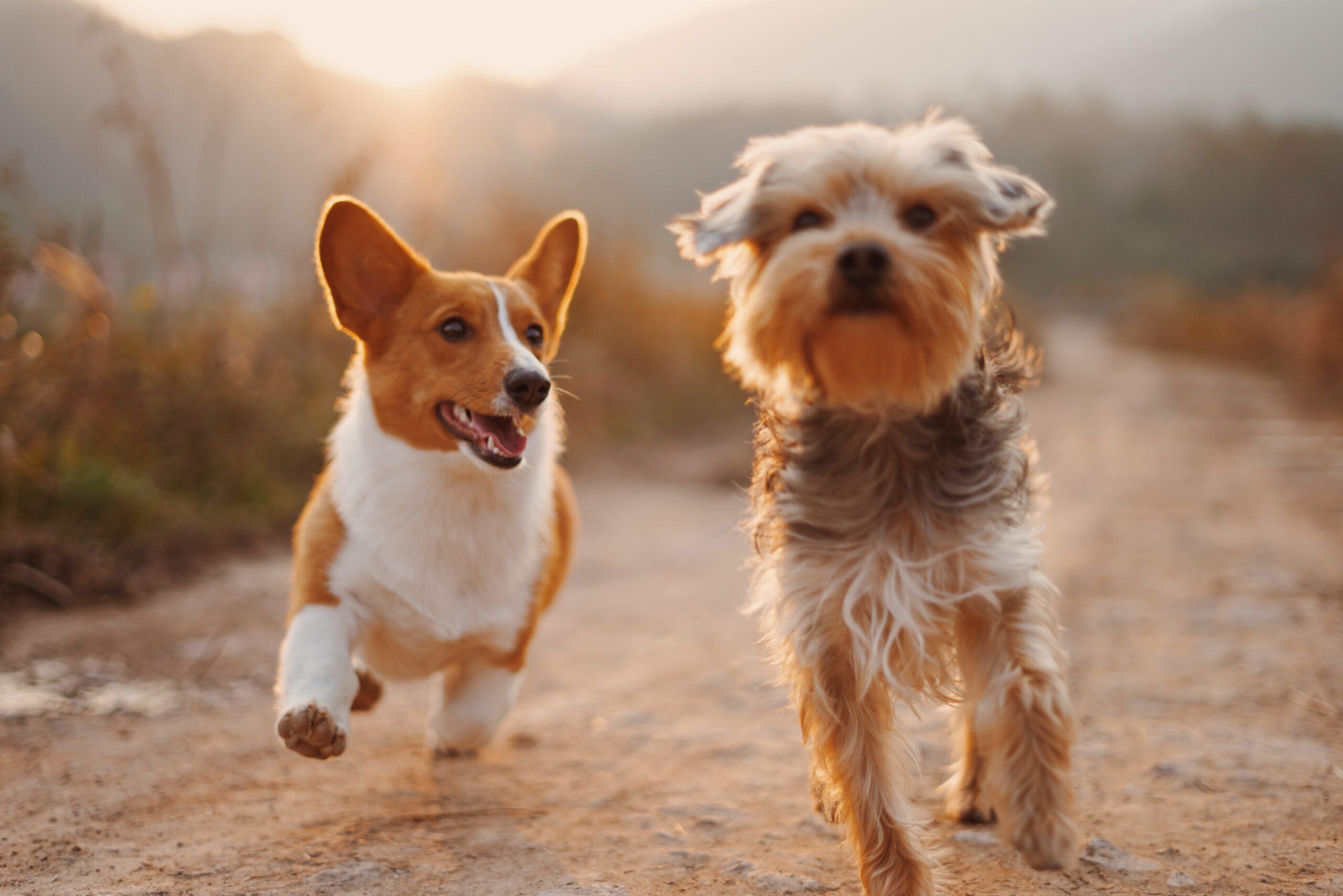 Für Zwischendurch: Gesunde Snacks für Hunde